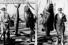 10 1910 Black Sea Bass 306 Pillsbury G Catalina