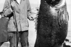 179 1920 Black Sea Bass 330 Pillsbury G Catalina